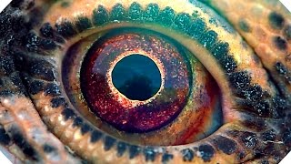 VOYAGE OF TIME Trailer Brad Pitt Terrence Malick  Documentary 2016