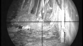 Смотреть онлайн Охота на крыс с прицелом и пневматическим ружьем