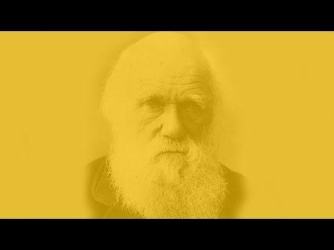 The Darwinian Race of the Markets