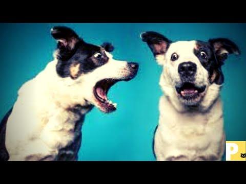 Cachorro latindo#latidodecachorro#somdecachorro#colatindo#dogbarking#dogbarkingsounds - Mrcp