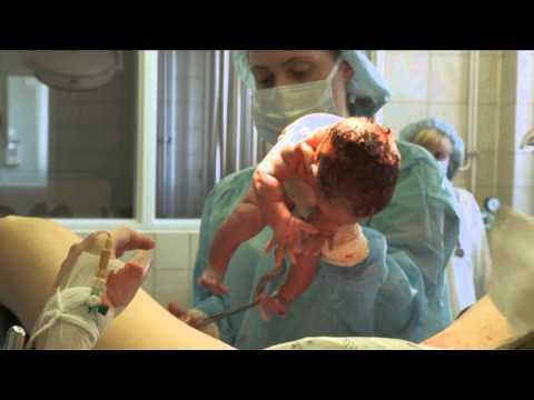 Смотреть как телка рожает