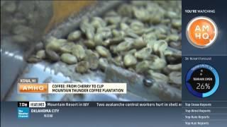 Mountain Thunder Coffee Plantation, Hawaii