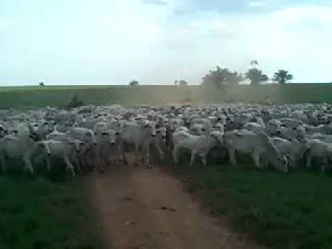 FAZENDA SOROCABANA PRIMAVERA DE RONDÔNIA - RO