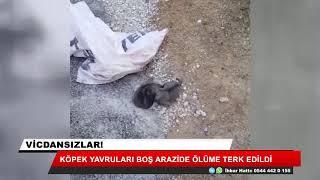Köpek yavruları ölüme terk edildi!