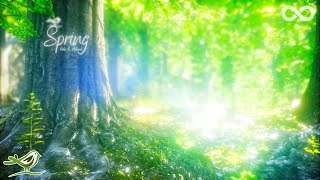 Spring • Schöne Entspannungsmusik mit Flöte, Cello, Gitarre und Klavier