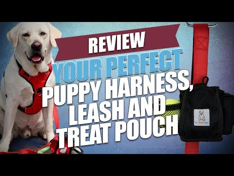 Your Perfect Puppy Harness, Leash And Treat Pouch Review