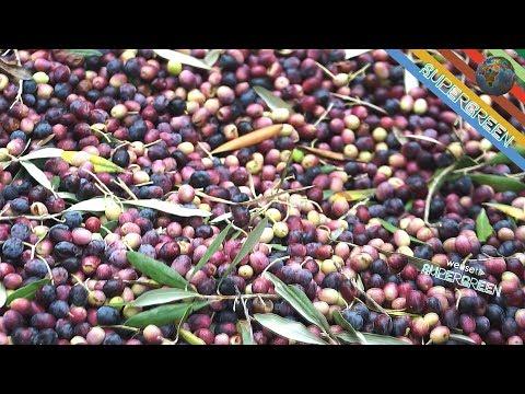 Influenza di potenzialità di tè nera