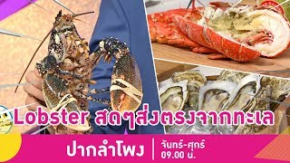 """น้ำลายหก! """"Lobster Gangsters"""" สดจากทะเลส่งตรงถึงมือคุณ   ปากลำโพง   22 พ.ค.61 (1/4)"""