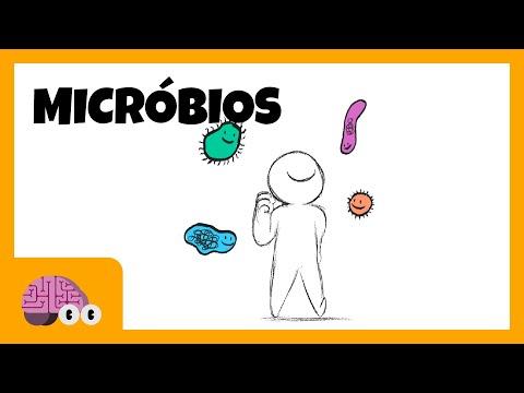 Micróbios afetam a mente?