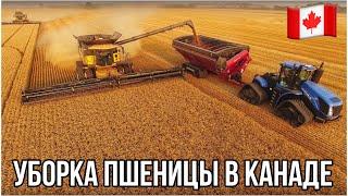 Уборка пшеницы в Канаде. Саскачеван. Канада глазами украинца.