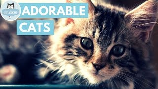 Cute Cats And Kittens #16 ✔