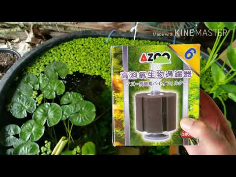 Download 100 Gallon Rubbermaid Stock Tank Outdoors Video 3GP