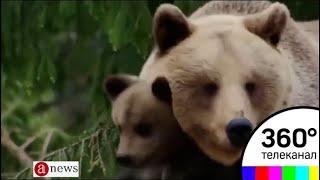 ФСБ предлагает объявить медведей стратегически важным ресурсом России - ANews