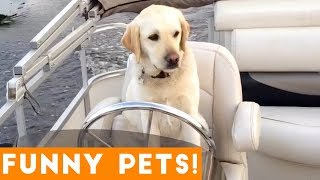 Funniest Pets & Animals of the Week Compilation August 2018   Funny Pet Videos