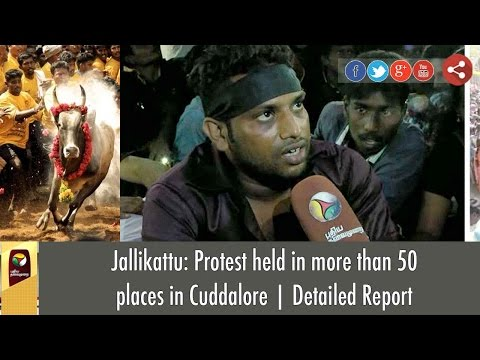 Jallikattu: Protest held in more than 50 places in Cuddalore | Detailed Report