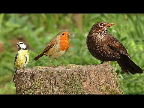 Tv For Cats And Dogs Videos For Cats And Dogs To Watch Birds The