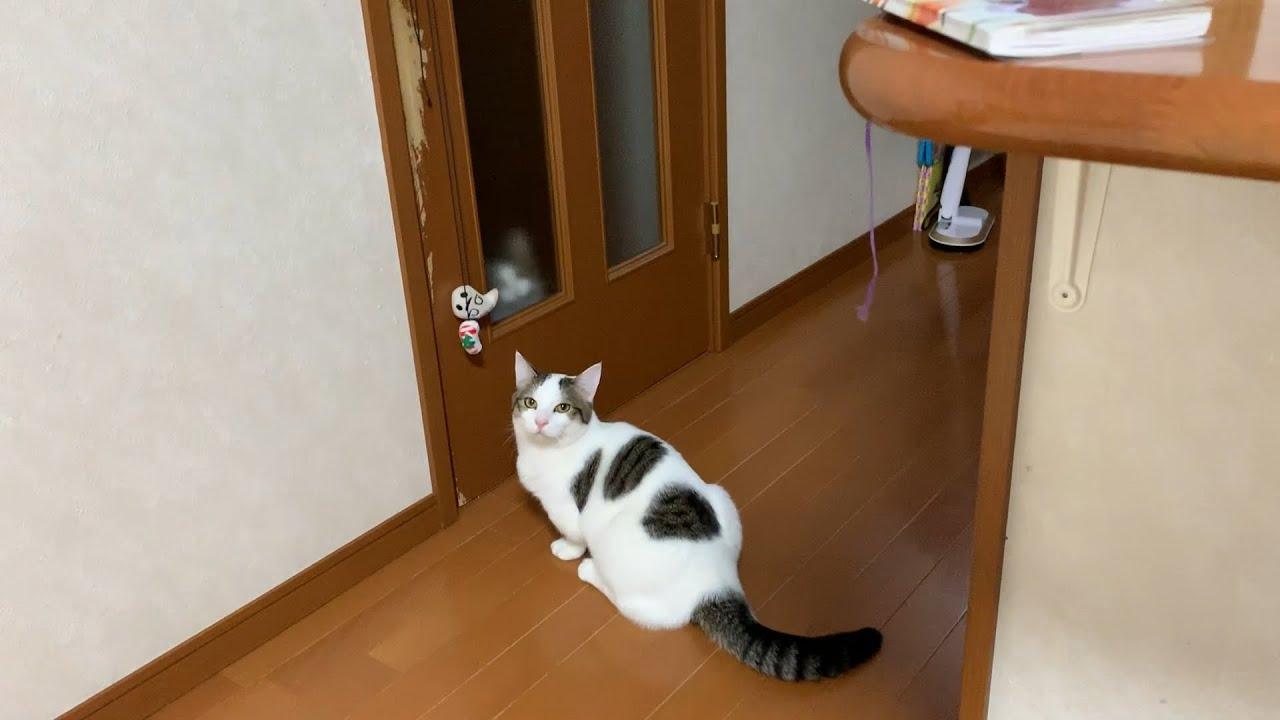 一旦停止を守る猫