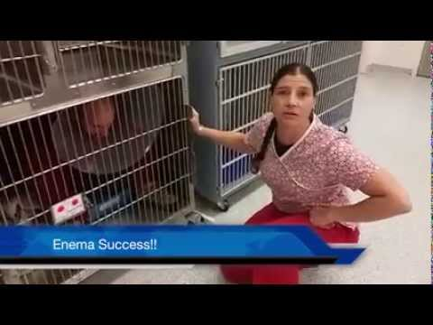 Handling a Fractious Cat for Enema: Guy playing the cat deserves an Oscar.