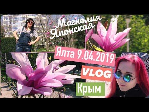В краю магнолий плещет море))) весна в Крыму. ЯЛТА 💕 VLOG