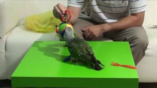 Baby Toys for Parrots