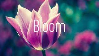 Dabin   Bloom Ft. Dia Frampton (Lyrics)