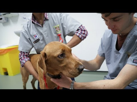 Studying Veterinary Medicine at Cambridge University