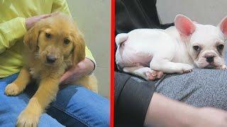 CHOOSING A PUPPY!!