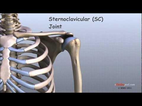 Reemplazar la articulación de la rodilla en los costos de Saratov