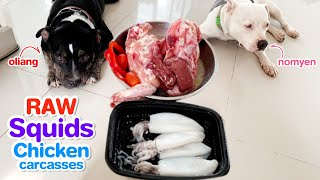 Pit Bulls 1st time eat RAW Squids, Chicken carcasses, livers and a little salad [ASMR] mukbang, BARF