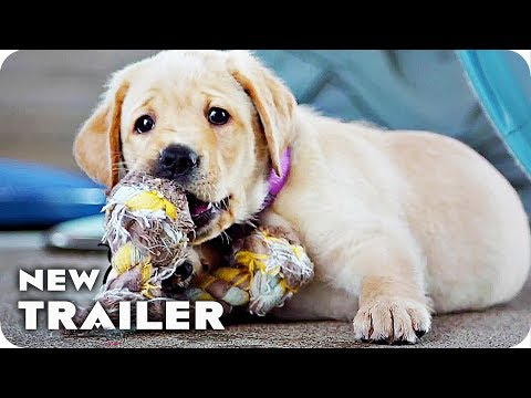 Pick of the Litter Trailer (2018) Guide Dogs Documentary