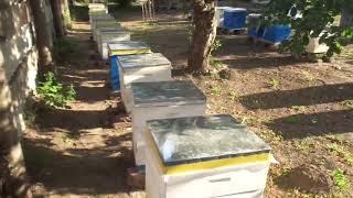Пчёлы ( Подкормка пчёл на зиму.Какая кормушка лучше?)