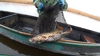 На что клюет амурский сазан в рыбном месте