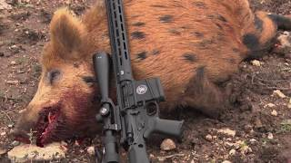 Hog Hunting with Performance Center & Smith Wesson Firearms