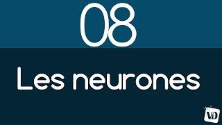 Vignette de Comment les neurones organisent votre cerveau