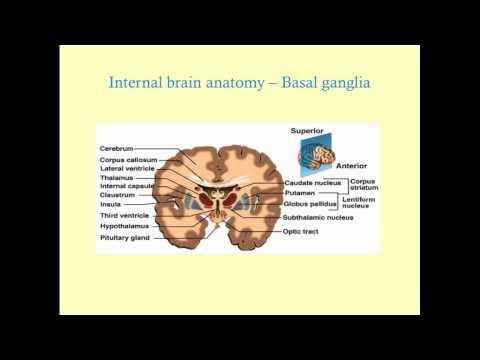 Podstawy neuroanatomii- CRASH!