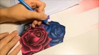 dibujar rosa a colores videos