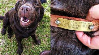 Люди кормили бродячего пса, пока не взглянули на его ошейник