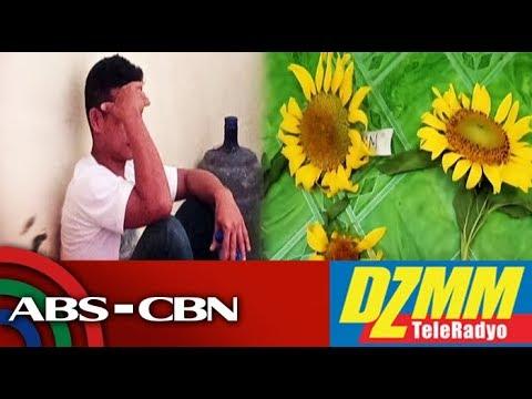 [ABS-CBN]  'Para sa GF': 3 lalaki kulong matapos mamitas ng sunflowers sa Iloilo City   DZMM