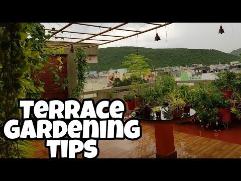 Terrace gardening tips for beginners. టెరస్ గార్డెన్ పై ముఖ్య  సూచనలు.