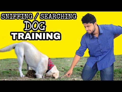 Dog training - Train Your Dog Basic Sniffing / searching (Hindi ...
