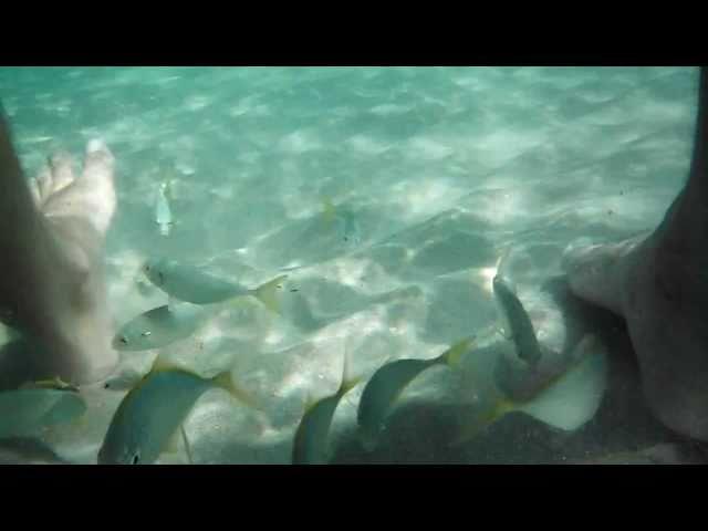 Tropical Fish Love Affair