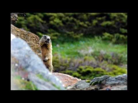 Preview video Corso di escursionismo avanzato 2011