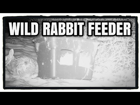 , title : 'Wild Rabbit Winter Feeder   What to Feed Wild Rabbits   Homesteading / Hunting