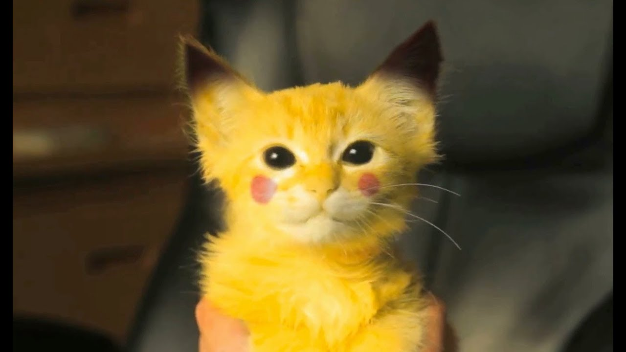 The Explosive Cuteness Of A Real-Life Pikachu-Kitten