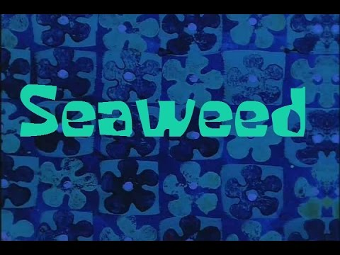 Download Mp3 Seaweed Songebob Sound Effect — MP3 DOWNLOAD