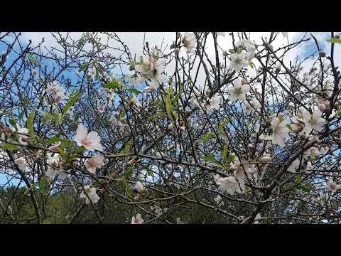 а у нас начинается весна . рановато