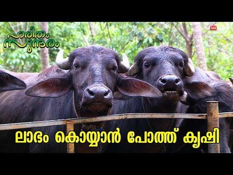 Buffalo farming for reaping large profits | Haritham Sundharam | EP 216