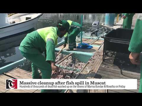 Massive cleanup as dead fish wash up at Bandar Al Rowdha