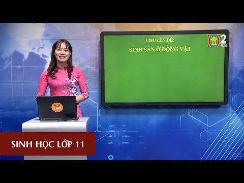 MÔN SINH HỌC - LỚP 11| SINH SẢN Ở ĐỘNG VẬT (TIẾT 1) | 16H30 NGÀY 25.04.2020 | HANOITV