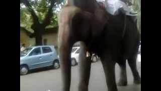 Прикол. Слон уронил велосипед. Смешное видео